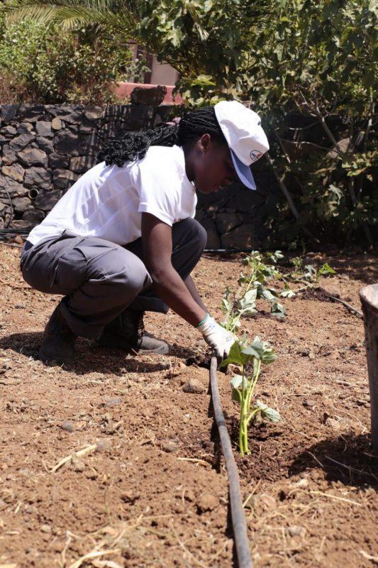El valor de los parásitos para la agricultura